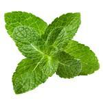 Piparmündileht (Mentha Piperita Leaf)